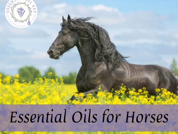Essential Oils for Horses with Dr. Janet Roark (DVM) course image