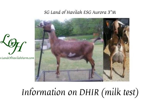 Information on DHIR (Milk Test) course image