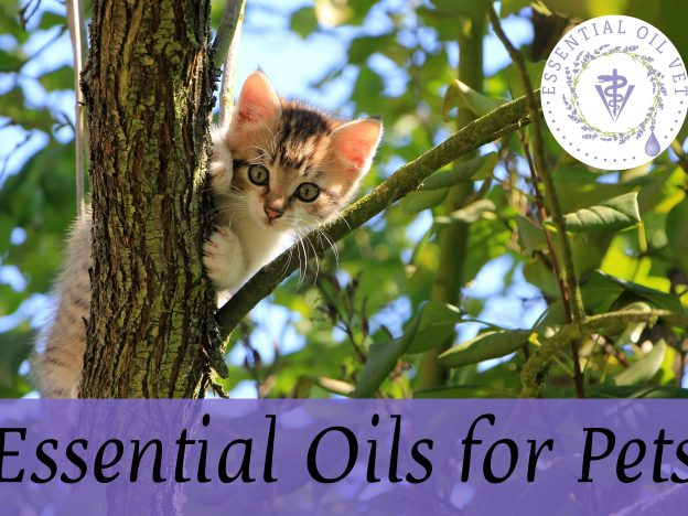 Essential Oils for Pets with Dr. Janet Roark (DVM) course image