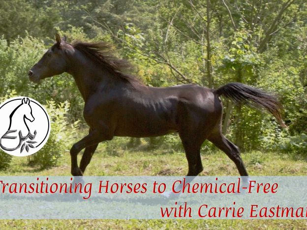 Transitioning Horses to