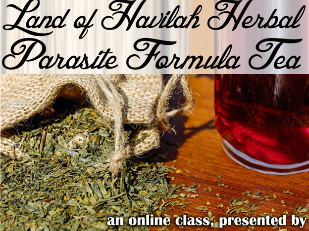 How to Prepare Herbal Parasite Formula Tea with Kristie Miller, MH, CA course image