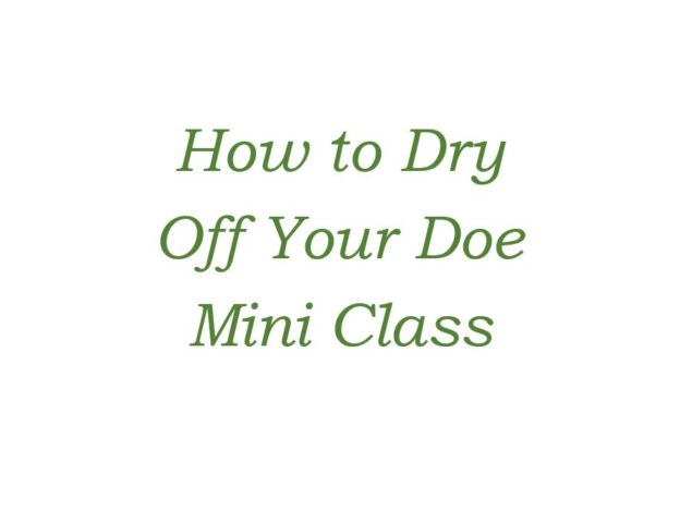 How to Dry Off Your Doe - Mini Class course image