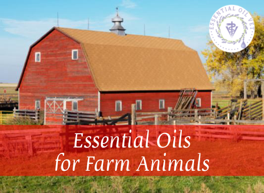 Essential Oils for Farm Animals with Dr. Janet Roark (DVM) course image