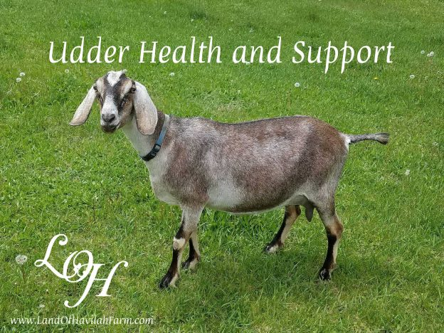 Udder Health & Support with Kristie Miller, MH, CA course image