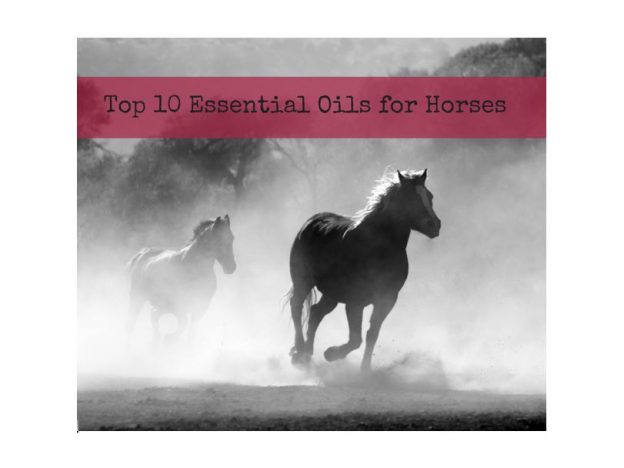 Top 10 Essential Oils for Horses WEBINAR with Dr. Janet Roark (DVM) course image