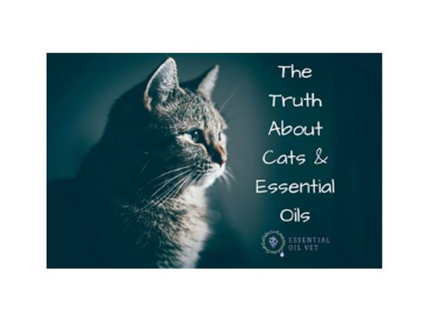 The Truth about Cats and Essential Oils with Dr. Janet Roark (DVM) course image