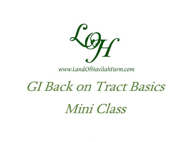 GI Back on Tract Basics - Mini Class course image