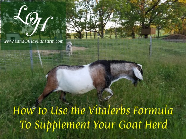 How to Use the Vitalerbs Formula to Supplement Your Goat Herd/Animals course image